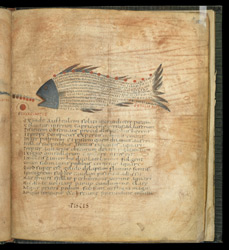 Piscis (The Fish), in a Late Roman Version of Cicero's 'Aratea'
